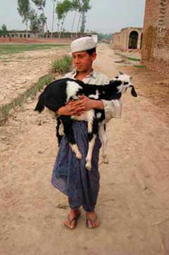 Boy and goat
